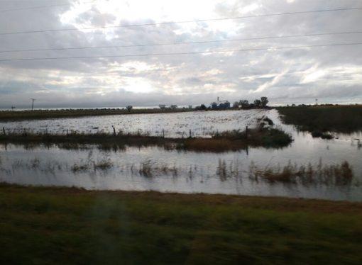 La Bolsa de Comercio de Santa Fe confirmó que el agro se recupera tras las inundaciones