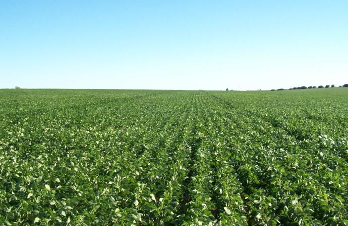 Boom de insumos agropecuarios: el sector se prepara para un año exigente