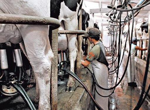 Tamberos piden 6 pesos por litro de leche