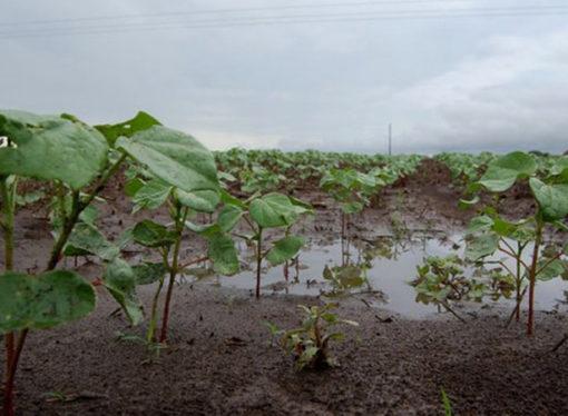 Alerta Santa Fe: Proyectan lluvias excesivas en plena siembra