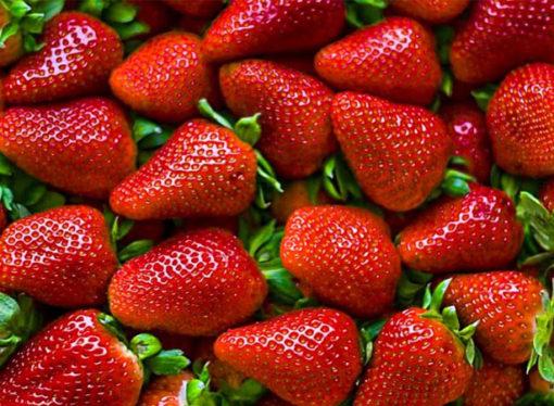 La importación de frutillas subió 400% y afecta severamente a productores locales