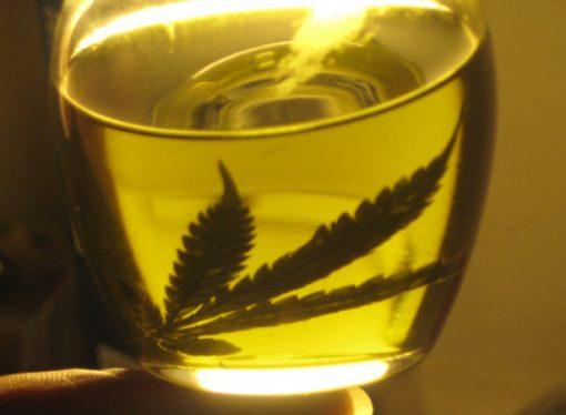 Santa Fe, muy cerca de producir cannabis medicinal