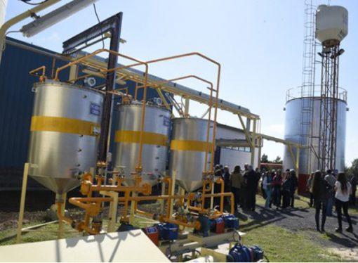 Ponen en marcha planta extractora de aceite única en Latinoamérica