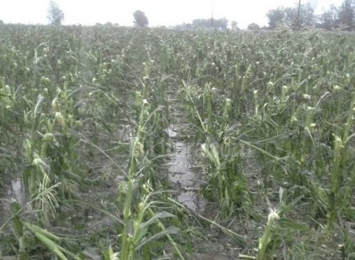 Proponen declarar la emergencia agropecuaria en cinco departamentos