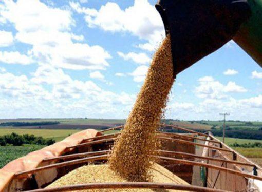 El gobierno prevé una cosecha récord de granos