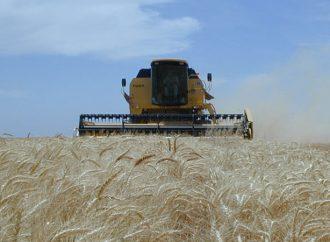 Condiciones ambientales óptimas para el trigo cuya superficie implantada alcanzó las 358.500 ha