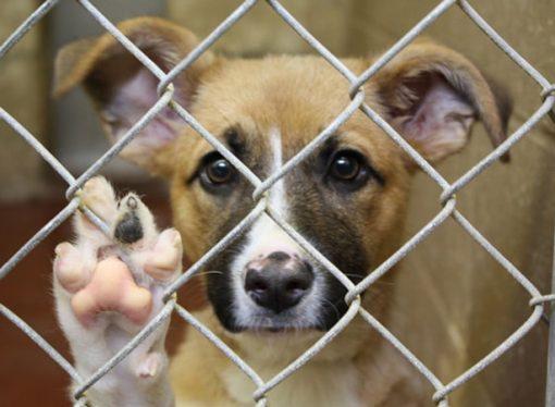 Refugio Canino, ese lugar donde más de 90 perros esperan por un hogar