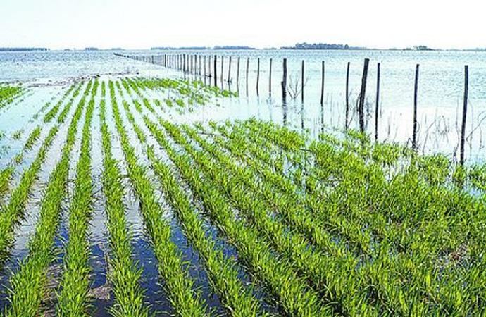 En Rosario se analizaron los riesgos del clima y los mercados para la producción agropecuaria