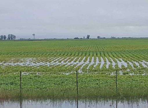 Soja: un millón de hectáreas menos