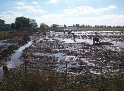 Convocan a la Comisión Provincial de Emergencia Agropecuaria
