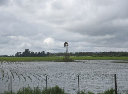 La erosión hídrica afecta a casi la mitad del territorio santafesino