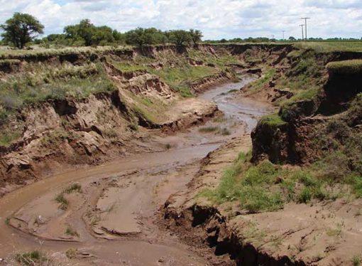 Inundaciones y producción agropecuaria: documental del Conicet que indaga la relación