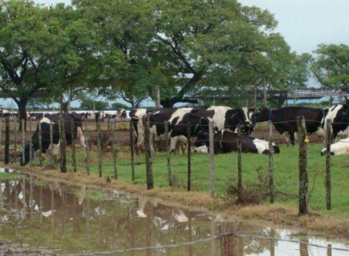 Piden la urgente declaración de emergencia del sector lechero