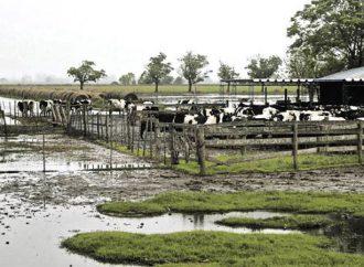 Provincia reclama a Nación los fondos comprometidos para asistir a los tamberos