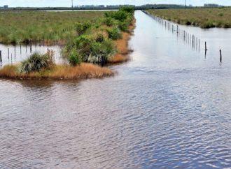 Aseguran que las lluvias de la última semana no tendrían gran impacto en los cultivos
