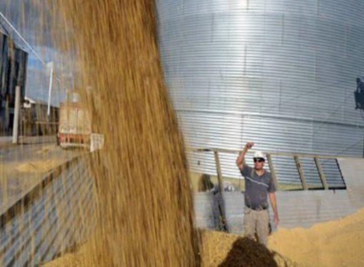 Caen en 40 acopios con millonarias multas por infracciones en carga de granos