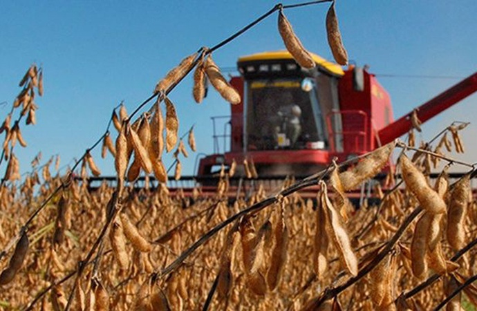 Aumentan las expectativas del trigo y avanza la siembra de soja en Santa Fe