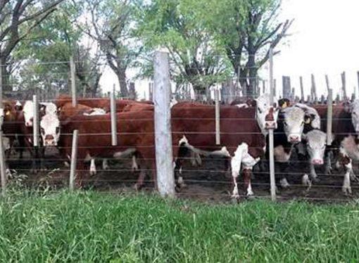 Ofrecerán bonificaciones a productores santafesinos que compren ganado en Rafaela y San Justo