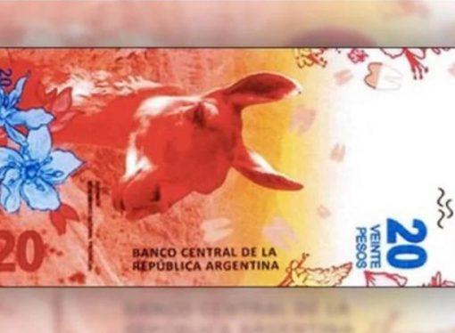 Lanzan el nuevo billete de 20 pesos con un guanaco como figura