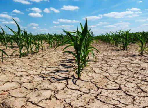 Declararon la Emergencia Agropecuaria en distritos de Santa Fe afectados por sequía