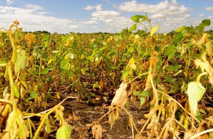 Por la sequía, hay dos pedidos en la Legislatura para declarar Emergencia Agropecuaria en el sur santafesino
