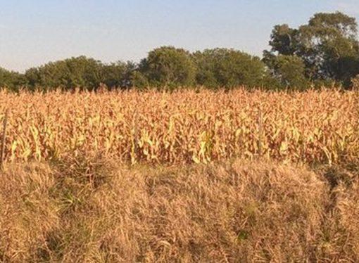 La sequía y un masivo pedido de informes