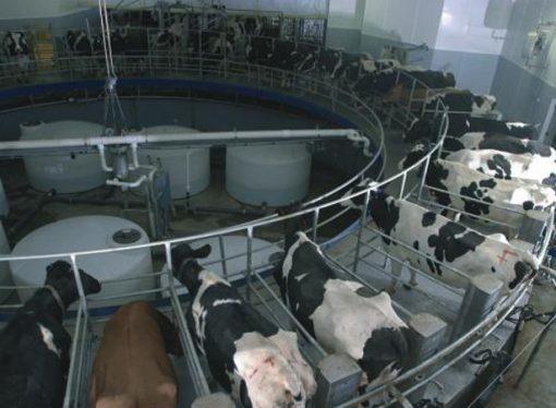 Dos nuevos objetivos para la lechería argentina