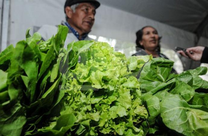Tras la lluvia y el granizo, anticipan que las verduras de hojas costarán el triple