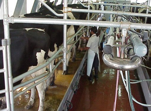 El precio pagado por la leche cubre sólo el 73% de los costos de producirla