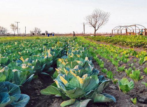 San Jorge: proyecto para promover la agroecología y alejar las fumigaciones