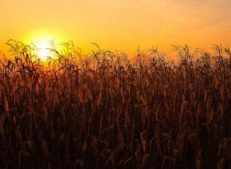Un informe especial del SMN advierte por altas temperaturas