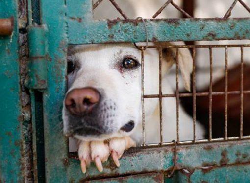 Regular la crueldad y el maltrato animal: qué dice el dictamen para modificar la ley 14.346