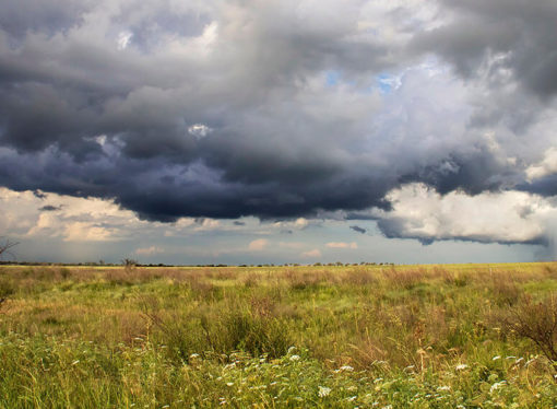 En zona núcleo faltan 300 milímetros de lluvia respecto de la media