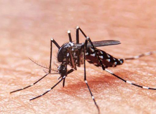 La provincia registra 5.098 casos de dengue