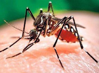 El dengue avanza en la provincia y ya son más de 4700 los casos positivos