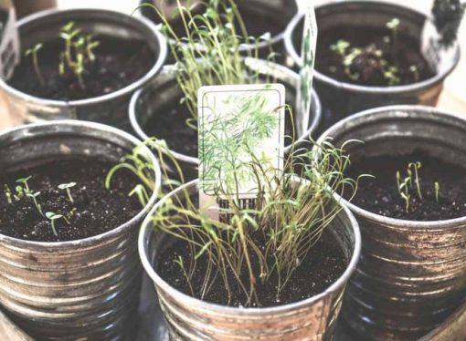 5 plantas para cultivar en casa