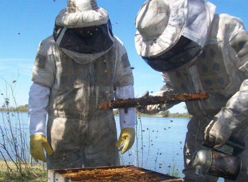 Santa Fe se consolida como productora de miel orgánica