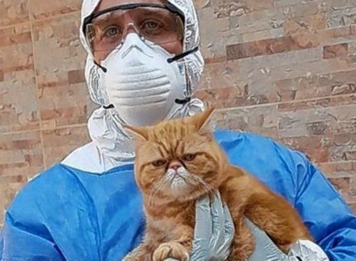 Investigación nacional: en Santa Fe buscan animales para testear por coronavirus