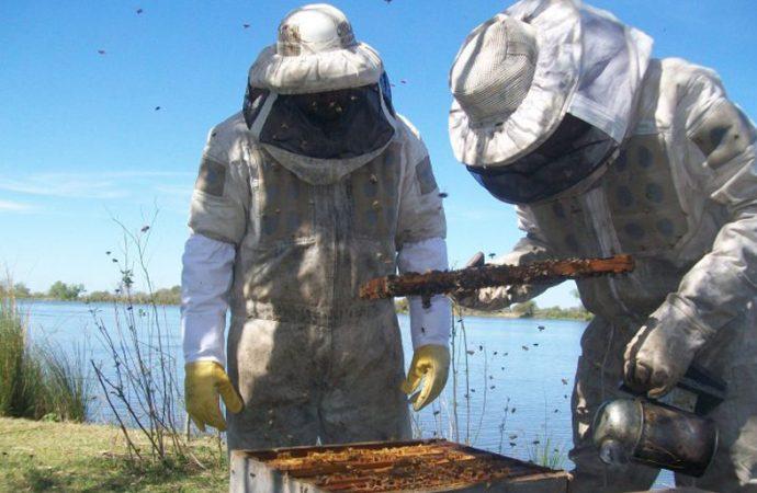 Santa Fe lidera la exportación de miel junto a Buenos Aires y Entre Ríos