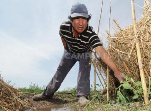 Nuevas escalas salariales para trabajadores rurales