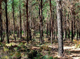 Santa Fe incorporó más de siete mil hectáreas nuevas de bosques nativos