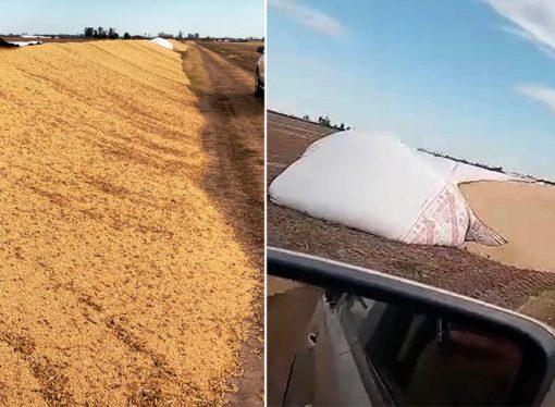 Esmeralda: rompieron silobolsas con casi 400 toneladas de soja