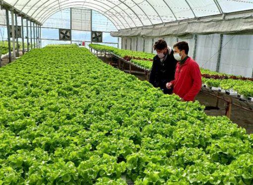 Apuntan al crecimiento del sector frutihortícola a partir de un fuerte financiamiento