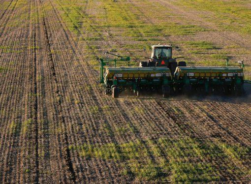 La falta de agua impacta en el trigo y frena la siembra de maíz