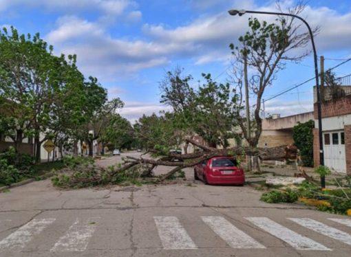 Voladuras de techos y árboles caídos, el saldo del temporal en la región