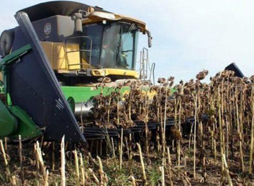 Productores de Santa Fe no cubrieron previsiones de girasol y maíz por la sequía